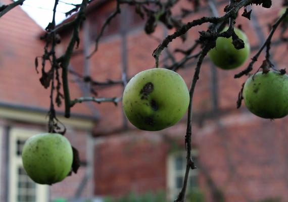 Jabłko i globalizacja